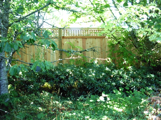 Lovely and large private backyard is fenced and includes a professionally built wooden garden shed